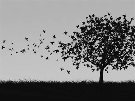 wallpaper black and white trees tree black and white hd background wallpapers 4253