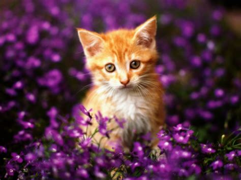 cat and pictures cats images collection for free