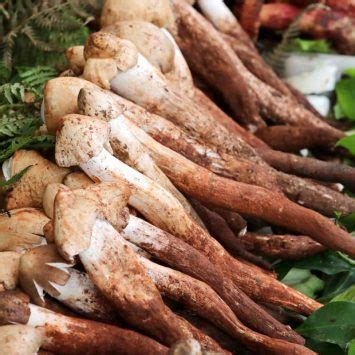 yunnan mushrooms « week in china