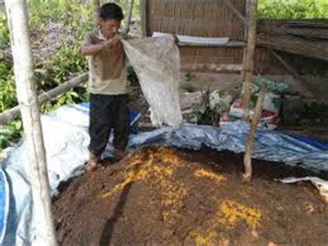 Pupuk Dolomit Untuk Cabe macam macam cabe yg bisa di tanam di indonesia