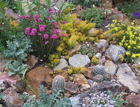 plants for rock garden plants for rock gardens zone 5 and photos