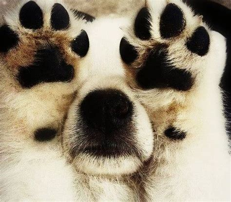 puppies with big paws paws 171 comical creatures