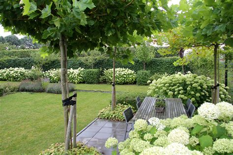 witte thee tuinen mooie boompjes voor de voortuin garden garden garden