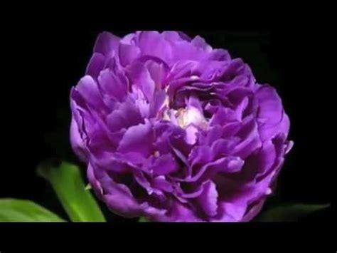 imagenes mas lindas del mundo las flores mas hermosas del mundo youtube