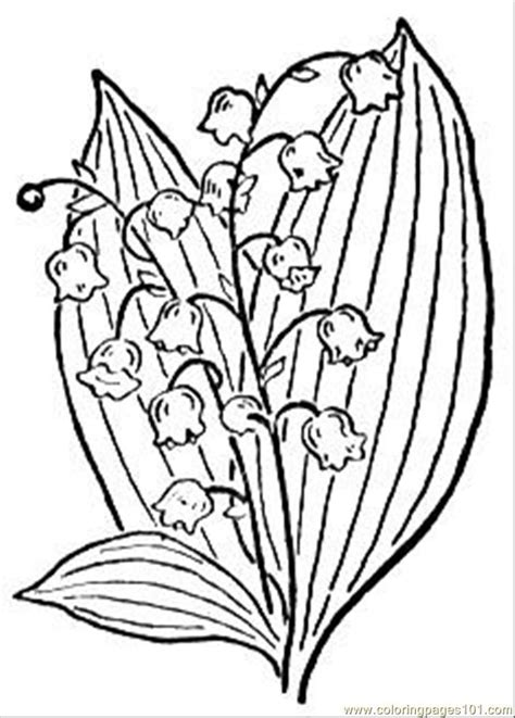 lily coloring pages free printable coloring page lily of