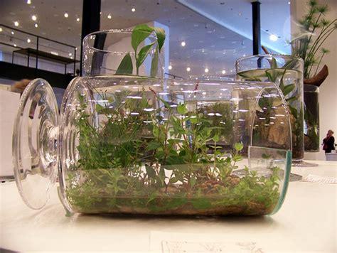 growing house plants   bottle garden