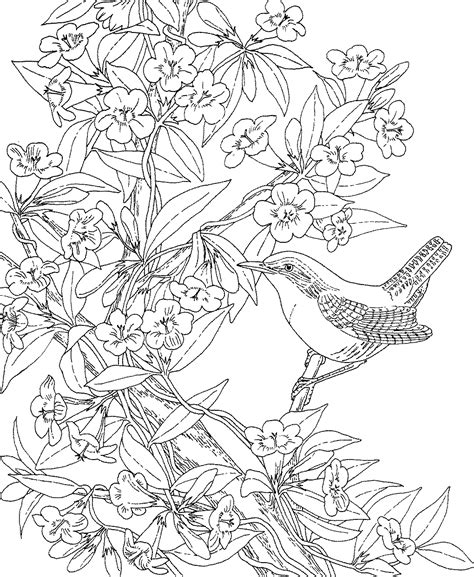 coloring pages of state birds and flowers free printable coloring page the south carolina state