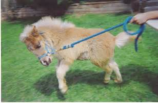 Gallery 598 baby pony horse wsource