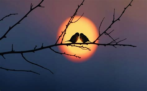 wallpaper hd for pc love love birds hd wallpapers beautiful loving birds