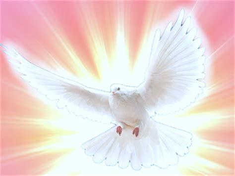 imagenes de palomas ok coraz 243 n de jes 250 s en vos conf 237 o los dones y los frutos del