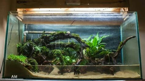 aquarium design kolkata betta fish tank setup ideas that make a statement