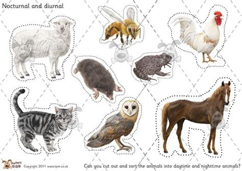 printable pictures nocturnal animals teacher s pet nocturnal diurnal animal sorting colour