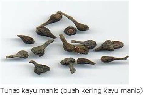 Minyak Kayu Manis kayu manis khasiat dan kegunaan