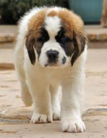 Puppies cute puppy names pictures of puppies amp more daily puppy