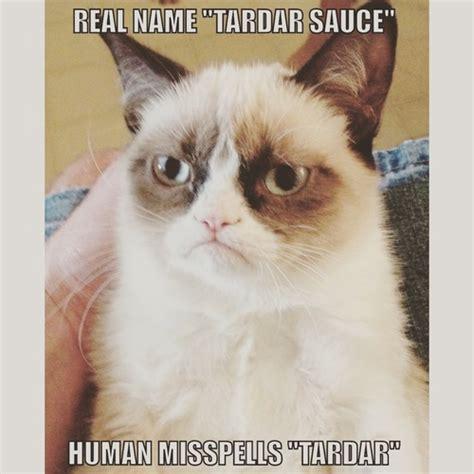 How To Make A Grumpy Cat Meme - grumpy cat memes grumpy cat merchandise on we heart it