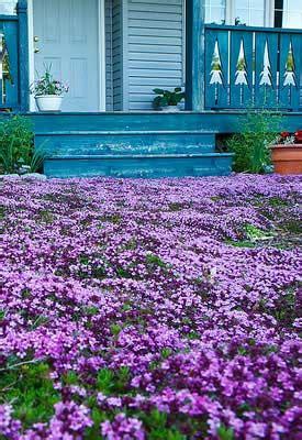 backyard grass alternatives lawn alternative on pinterest california native garden california native landscape