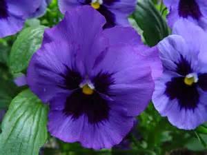 gorgeous flowers wallpaper 247847 fanpop