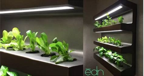 indoor hydroponic wall garden growing vegetables indoors twenty one at a time