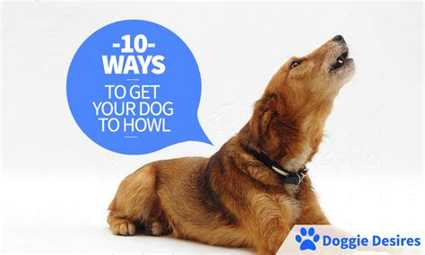 how to get your to howl 10 ways to get your to howl