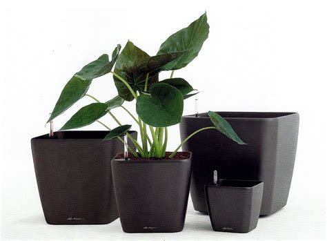 lechuza planters distinctive and unique in design