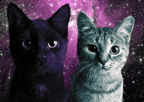 space cat wallpaper tumblr cats in space on tumblr