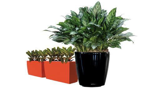foliage plants indoor indoor foliage plants quotes