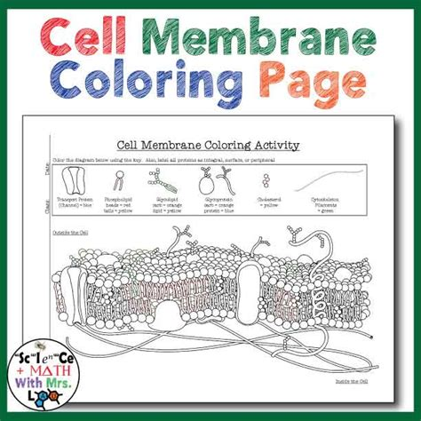 Cell Membrane Coloring Worksheet Answer Key Biology Junction by Cell Membrane Coloring Activity Help Students Identify