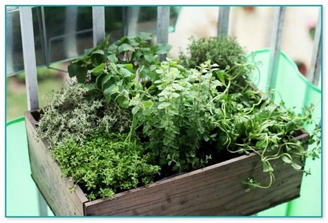 container herb garden for beginners best soil for container gardening