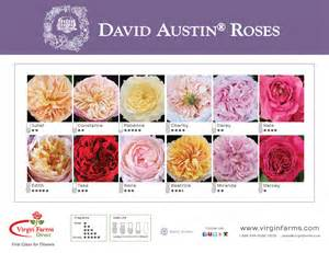 Peonies Wholesale Virgin Farms Garden Roses