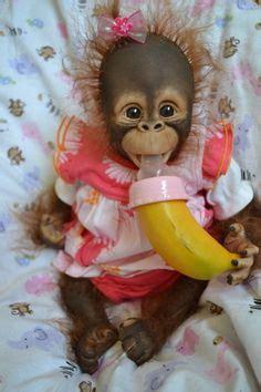 puppy monkey baby doll 1000 ideas about pet monkey on capuchin monkeys monkeys and pets