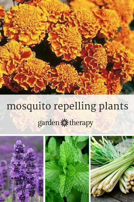 plants that keep mosquitoes away 182 best images about out doors on pinterest gardens