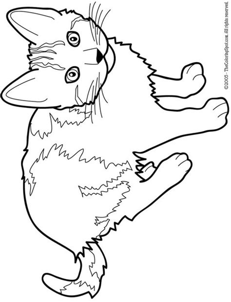cat color pages printable cat free printable coloring