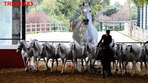 ombre cojiedo biejasombre cojiedo biejas burros cojiendo burras y yeguas sh 1314 hombres cojiendo