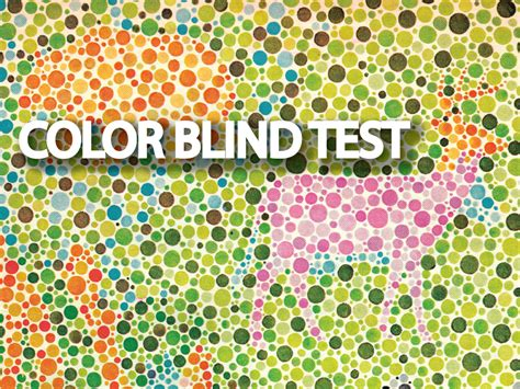 are animals color blind color blind test for with animals www imgkid