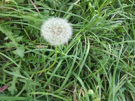 piante infestanti giardino erbe infestanti rimedi