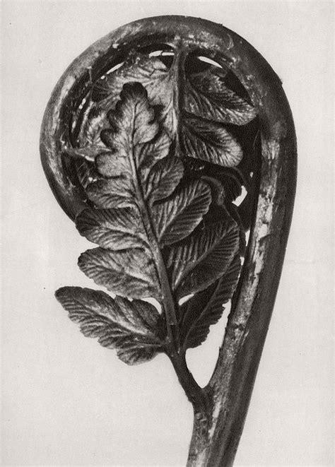biography of a fine artist biography fine art botanical photographer karl