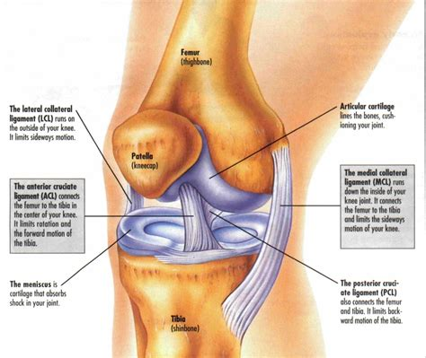 knee tendon diagram treatment of tendonitis joint strain and