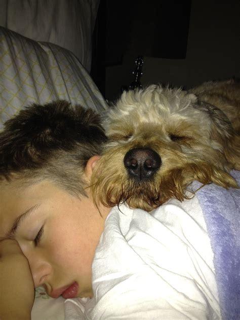 companion dogs goto best companion dogs