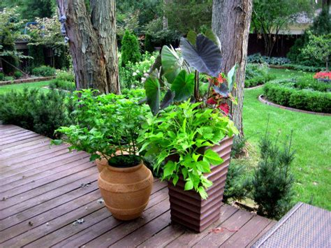 Small Container Garden Ideas Organic Container Gardening Ideas For Small Spaces
