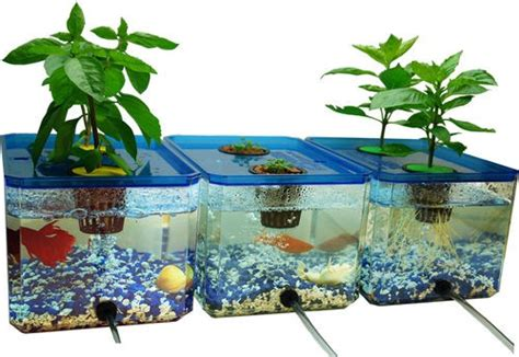 Fish Tank Vegetable Garden Hydroponic Gardening Fish Pond About Types Of Fish Indoor