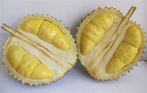 Biji Durian Candimulyo ragam durian nusantara mulai dari medan hingga tanah papua