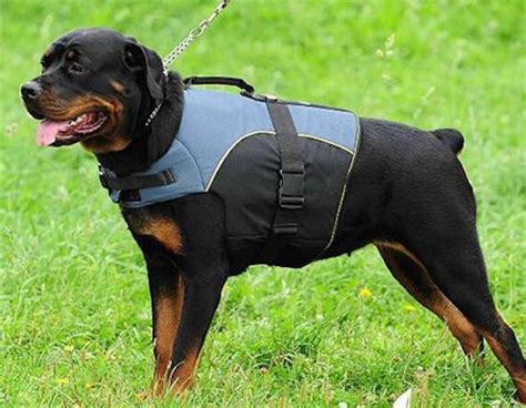 different colored rottweilers rottweiler vest rottweiler coat rottweiler jacket h13 1021 outdoor