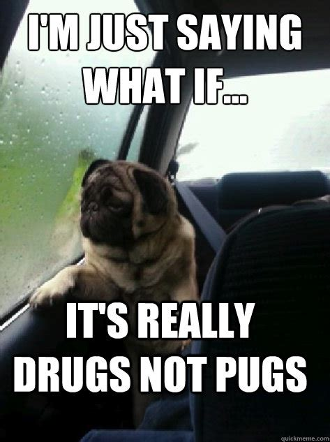 pug cocaine i put an in your ultrasound