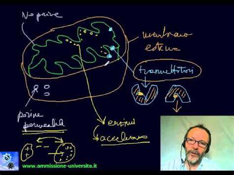 test ammissione medicina 2013 test ammissione medicina 2013 biologia monografia sui