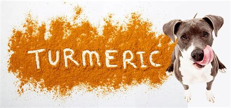 turmeric paste for dogs turmeric for dogs dosage for arthritis cancer skin problems and side effects dogs