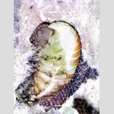 silkworm-spinning-cocoon