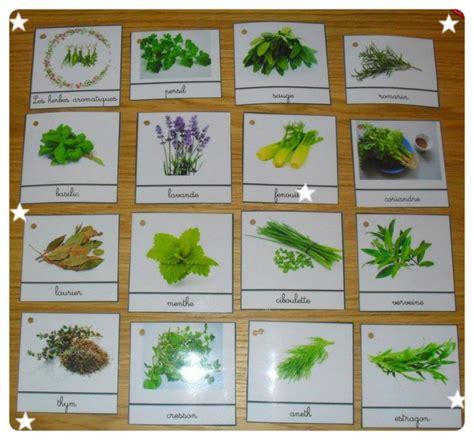 herbes aromatiques en cuisine plante aromatique archives page 14 of 15 fleur de