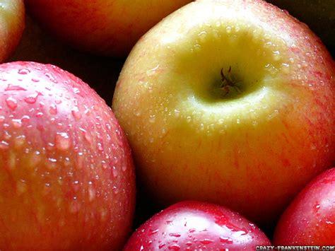 apple fruit fruit warehouse apple malus domestica