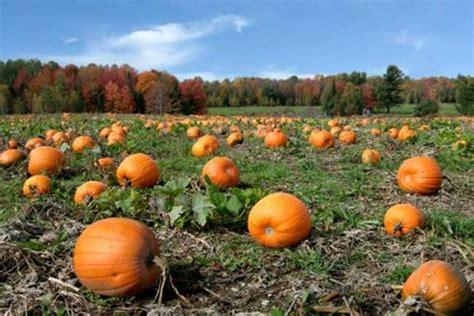 why do we carve pumpkins on why do we carve pumpkins at