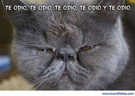 imagenes de lunes te odio te odio te odio